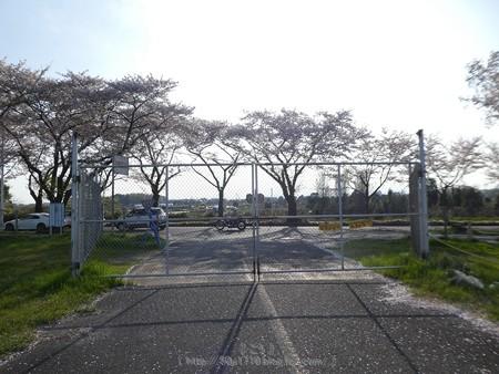 170414-上瀬谷原っぱ (29)
