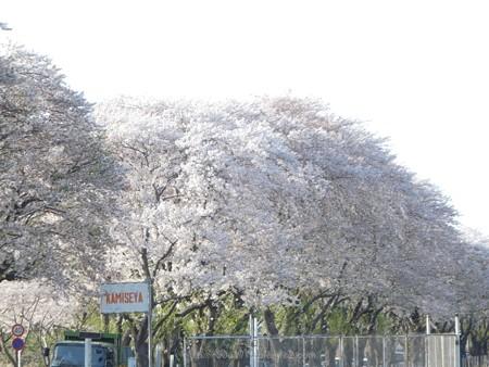 170414-上瀬谷原っぱ (48)