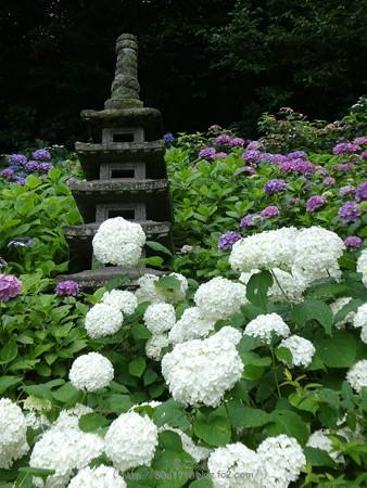 170628-鎌倉 長谷観音 (52)