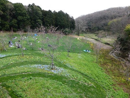 180324-里山ガーデン 大花壇 (1)