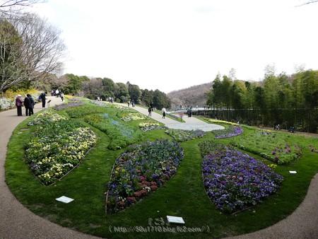 180324-里山ガーデン 大花壇 (19)