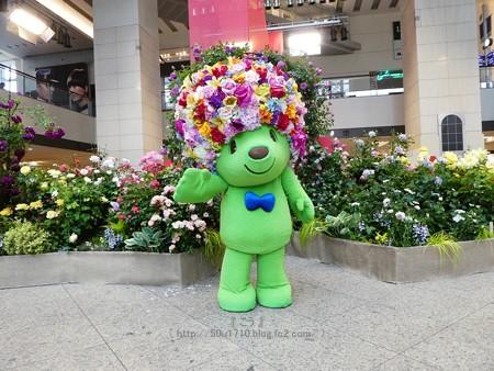 180508-ガーデンベア@趣味の園芸in横浜 (99)