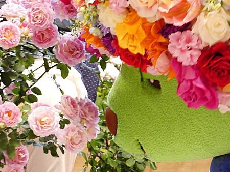 180508-ガーデンベア@趣味の園芸in横浜 (144)