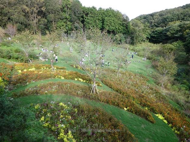 181014-里山ガーデン (2)