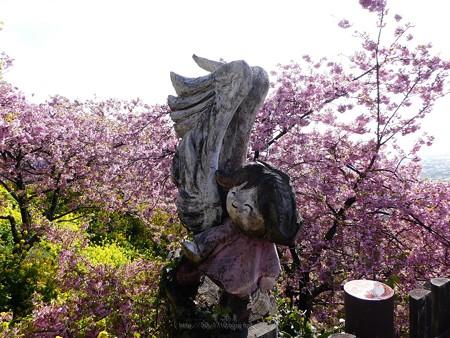 190304-松田山 河津桜 (93)