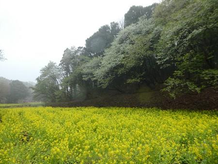 170409-里山ガーデン (44)
