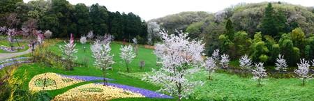 170409-里山ガーデン パノ (5)