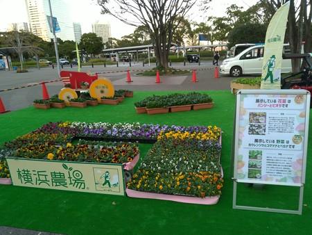 P_20191115_ガーデンベアフォトスポット@桜木町駅(準備中) (4)