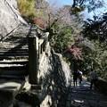Photos: 200106-久能山東照宮 石段 (31)