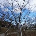 Photos: 200106-日本平夢テラス (20)
