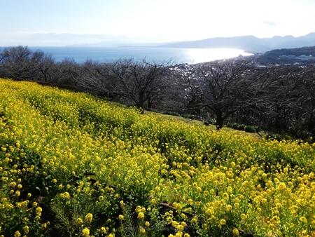 200209-吾妻山公園 (26)