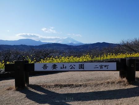 200209-吾妻山公園 (39)