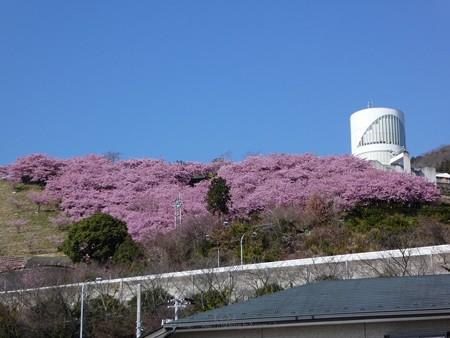 200221-松田山 (1)