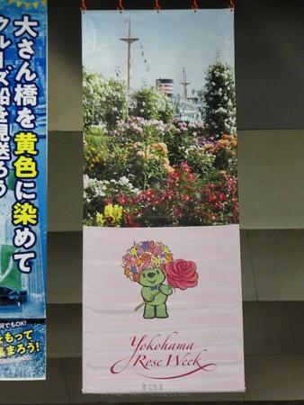 200326-ガーデンベアフォトスポット@大桟橋 (21)