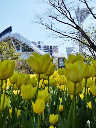 200406-横浜公園 (1)