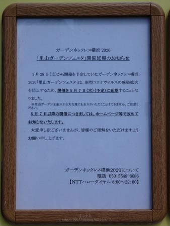 200411-新港中央公園 (6)