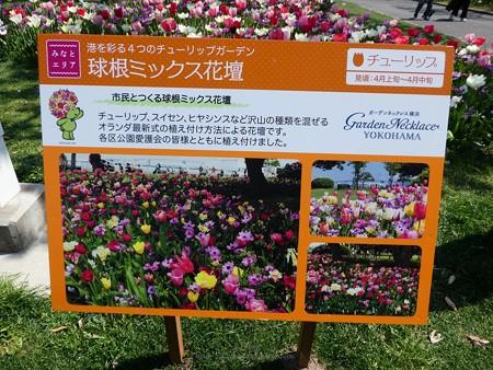 200404-山下公園 (1)