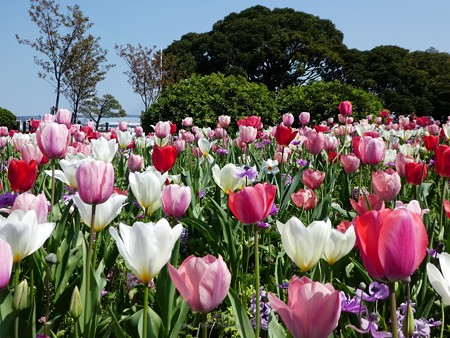 200404-山下公園 (4)