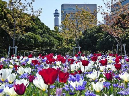 200404-山下公園 (8)