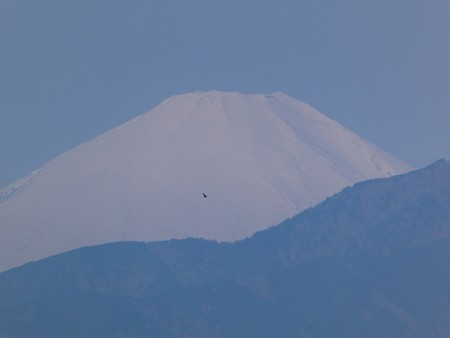 200406-富士山 (3)