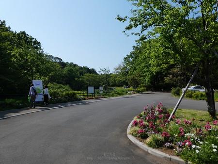 200429-里山ガーデン (4)