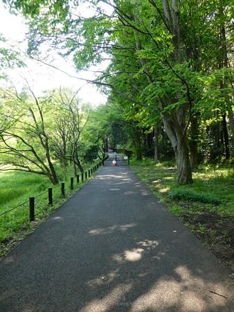 200429-里山ガーデン (48)
