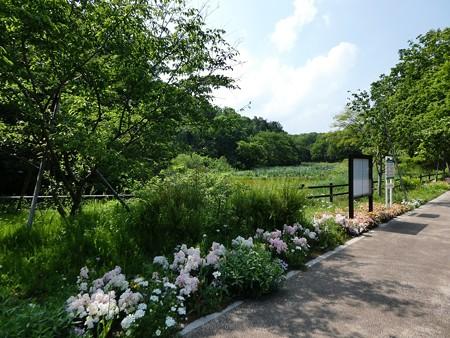200511-里山ガーデン (4)