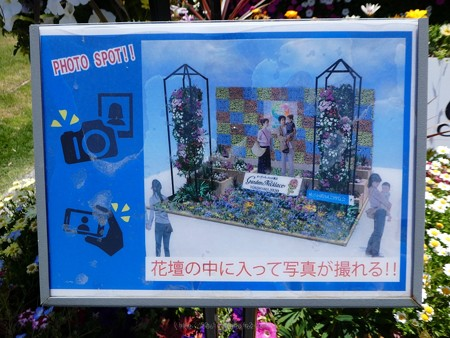 200525-ひろしまはなのわ 横浜市花壇 (4)