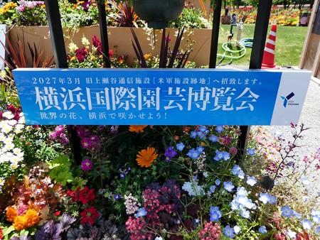 200525-ひろしまはなのわ 横浜市花壇 (7)