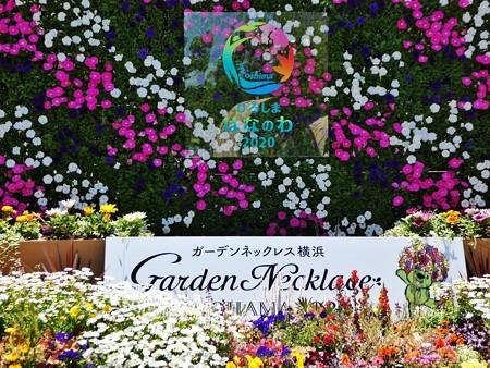 200525-ひろしまはなのわ 横浜市花壇 (31)