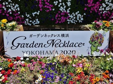 200525-ひろしまはなのわ 横浜市花壇 (37)