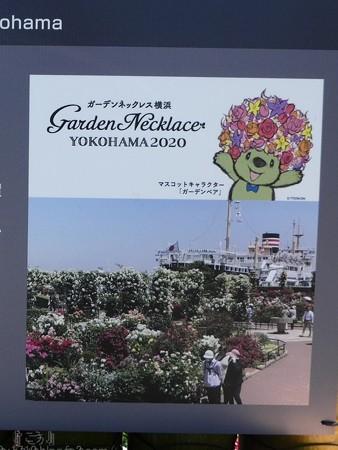 200525-ひろしまはなのわ 横浜市花壇 (35-1)