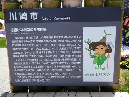 200525-ひろしまはなのわ 県外花壇 (62)