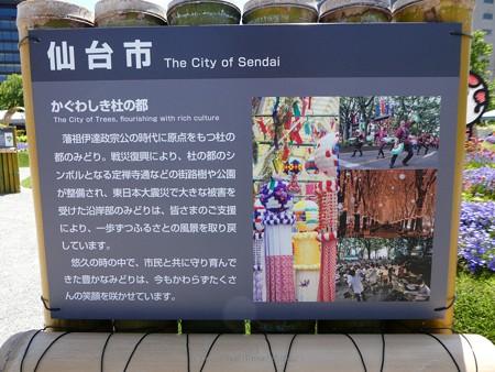 200525-ひろしまはなのわ 県外花壇 (66)