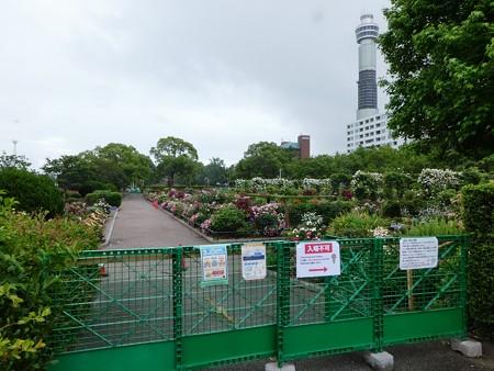 200601-山下公園 (4)