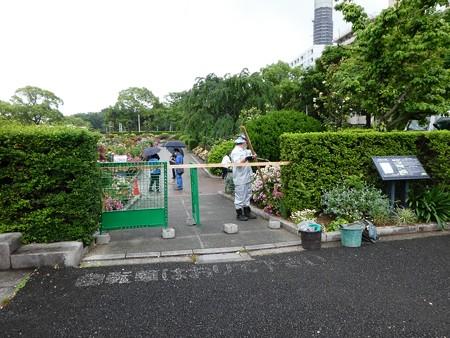 200601-山下公園 (6)