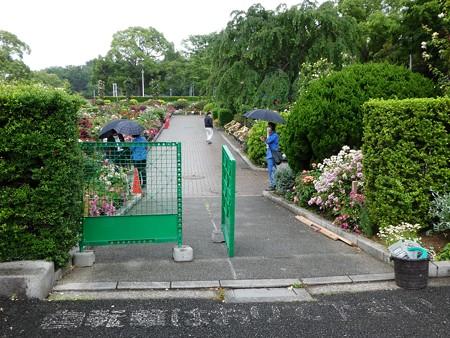 200601-山下公園 (7)