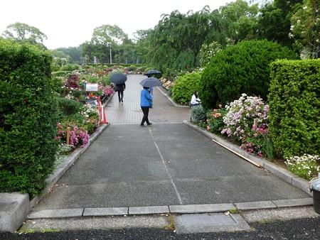 200601-山下公園 (10)