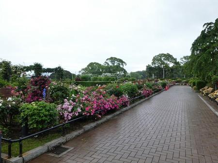 200601-山下公園 (13)