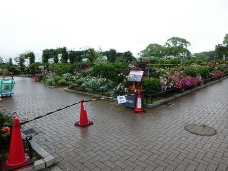 200601-山下公園 (14)