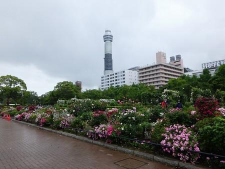 200601-山下公園 (47)
