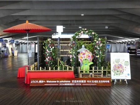 200601-ガーデンベアフォトスポット@大さん橋 (6)