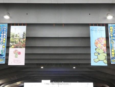 200605-ガーデンベアフォトスポット@大桟橋尾 (2)