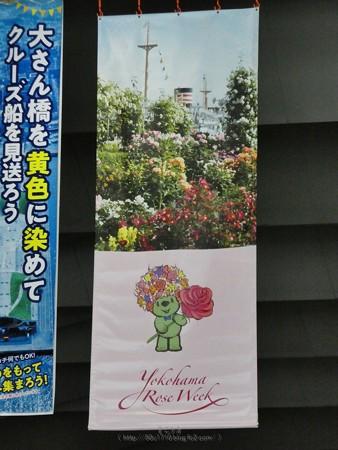 200605-ガーデンベアフォトスポット@大桟橋尾 (4)