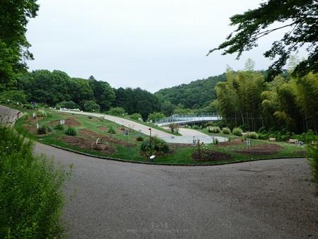 200518-里山ガーデン (68)