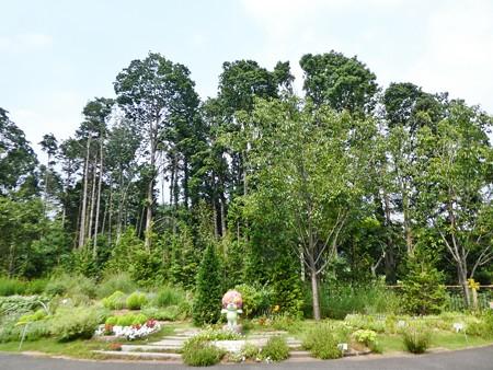 200808-里山ガーデン (26)