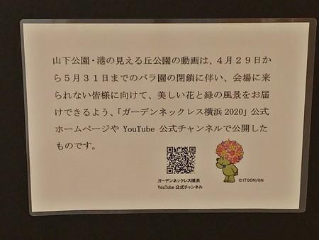 P_20200831_ガーデンベアフォトスポット@横浜市役所 (10)