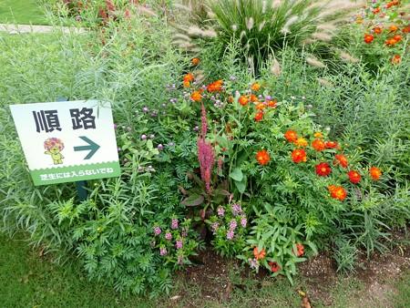 200919-里山ガーデン 大花壇 (7)
