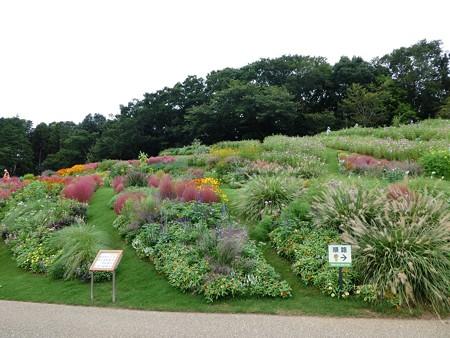 200919-里山ガーデン 大花壇 (13)