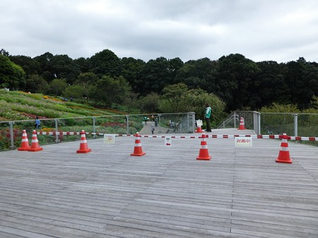 200919-里山ガーデン 大花壇 (74)